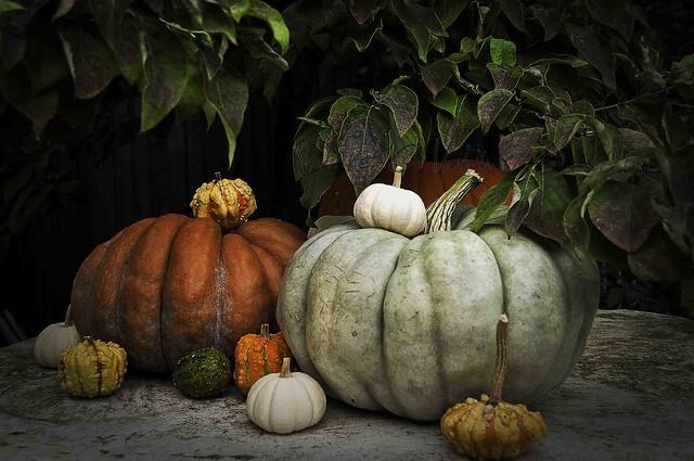House Pumpkins