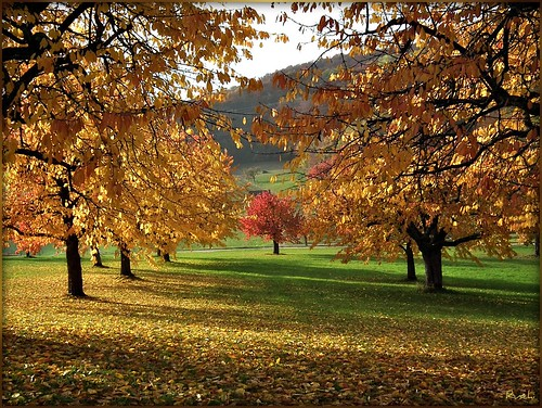 trees bäume sissach autumn herbst sun sonne colours farben switzerland schweiz ruschie alberoefoglia olétusfotos kunstplatzlinternational platinumheartaward