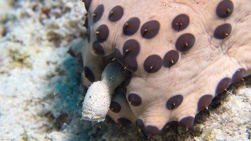 Can Dog Eat Sea Cucumber