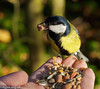 Great Tit Hand Feeding by Danny Gibson
