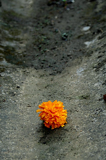 Flower in the gutter