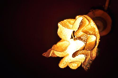 20111112 banana-ilan - 077