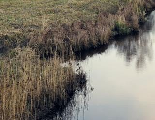 (318/365) Creek