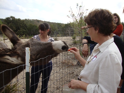 feeding the donkeys