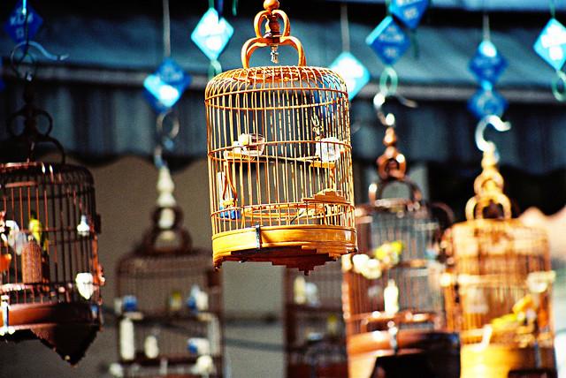birds singapore