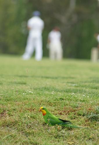 parrot conservation