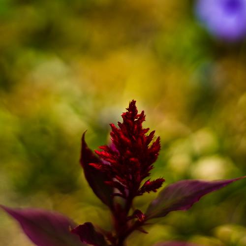 flowers nature flora jackolantern sony
