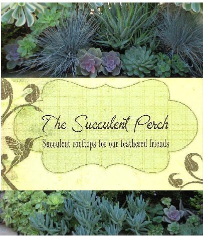The succulent perch 2