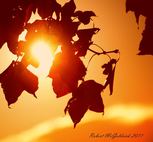 autumn sunset sunlight leaves relax card dumfries 2011