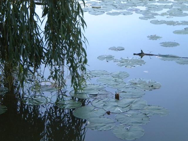 Laguna del Nagyerd? de Debrecen