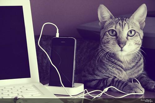 Tech Cat