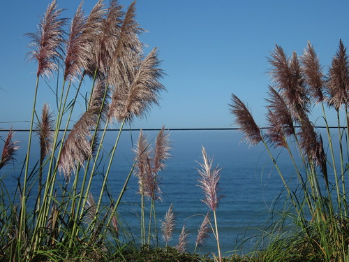 ocean california blue green northerncalifornia pacificocean grasses californiacoast