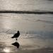 Bird in SF