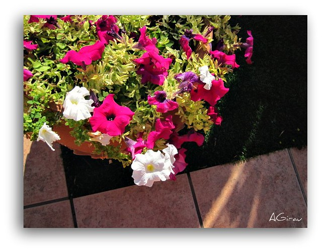 Maceta con flores. | Flickr - Photo Sharing!