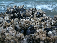 coral reef(0.0), coral(0.0), sand(0.0), seafood(0.0), invertebrate(0.0), pebble(0.0), reef(0.0), clams, oysters, mussels and scallops(0.0), rock(0.0), wildlife(0.0), marine biology(1.0), tide pool(1.0), geology(1.0), shore(1.0), coast(1.0),