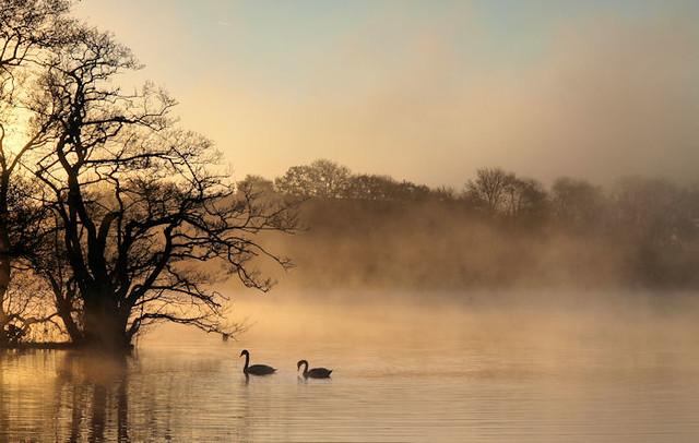 Carlingwark Swans ....