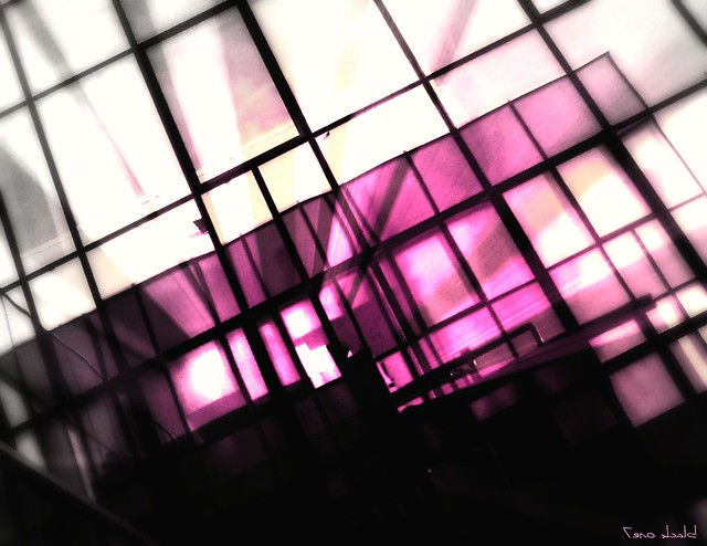 reflection in pink