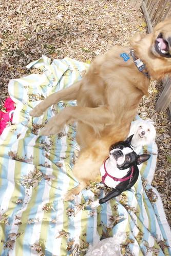 Doggie Photoshoot