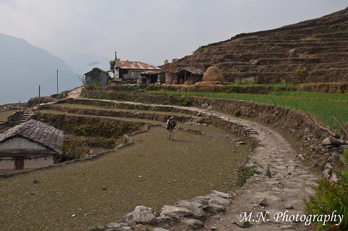 nepal house field village terraces route agriculture כפר בית בר ghandruk שביל threshingfloor חקלאות גורן aroundannapurnatrack טראסות