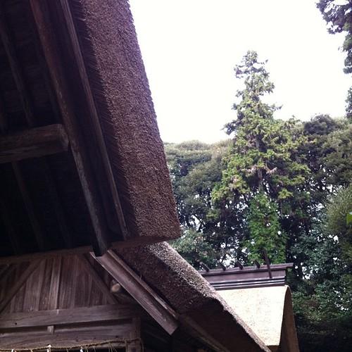 大神宮の屋根の茅葺き替えが出来上がったって聞いたので
