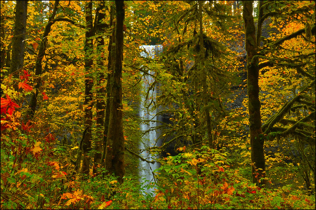 Silver Falls State Park With Fall Color South Falls