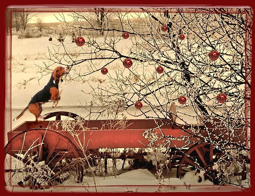 Pioneer Christmas card