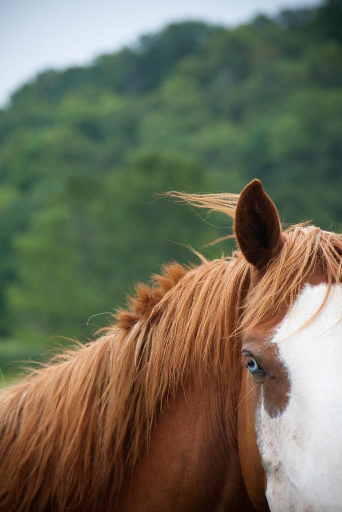 Horse-6462