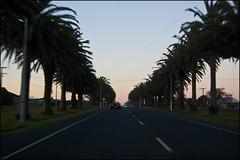 Parry Palm Avenue, Waihi