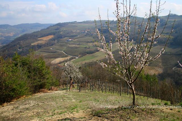 immagini colline Primavera nelle Langhe