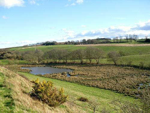 marshland near Kirkcaldy