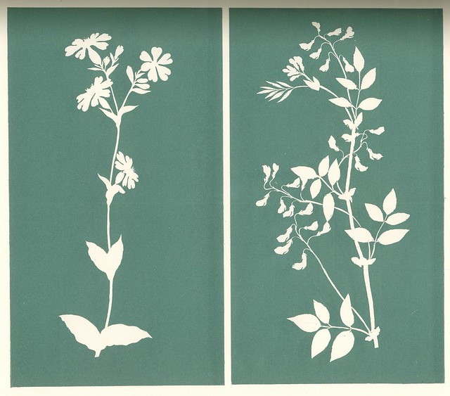 Ph. O Runge. Pflanzenstudien mit Scheere und Papier (Plant Studies with Cuttings and Paper). Hamburger Liebhaber Bibliothek, ca. 1805. Berlin, 1897. Pan. Vol. 4, no. 2.