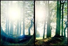 Chaika 3 half frame 35mm Fuji Superia 200 Trees and Sun 1