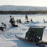 Kuujjuaq - Dry Bay Spring - Printemps
