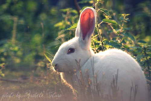 (Follow) the White Rabbit