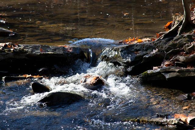 Five Rivers - Delmar, NY - 2010, Nov - 08.jpg