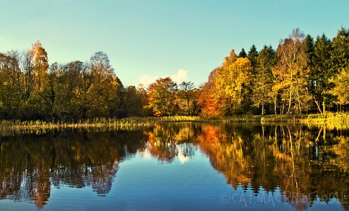 autumn trees ireland dublin lake water colors forest reflections colours 24 kildare tallaght donadea 134626406