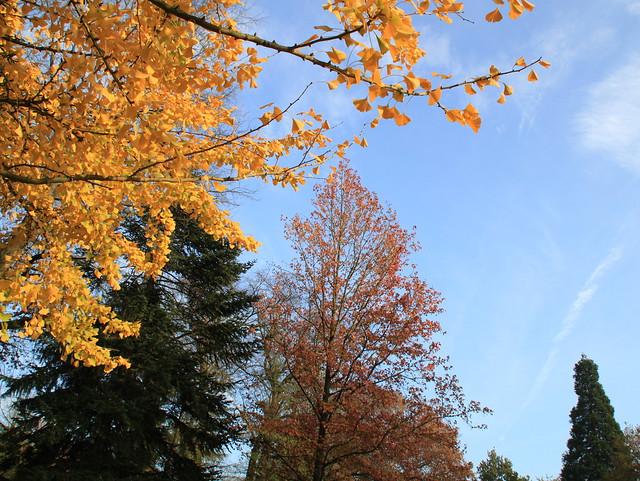 alberi d'autunno, Heverlee