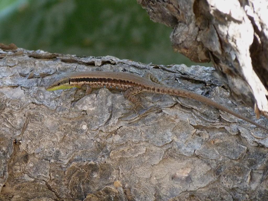11-11-2011-lifta-lizard