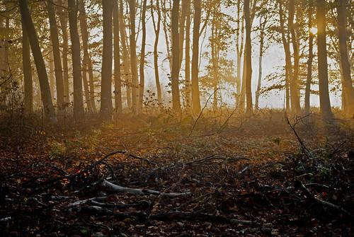 trees woods ketteringham
