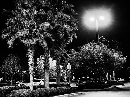 At Night in the Parking Lot