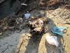 Alluvione 2011 Sangone 1