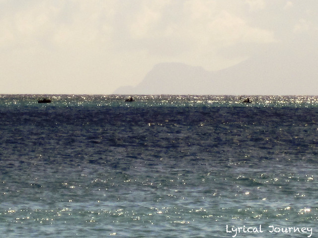 St Maarten 20111117_0398 WM