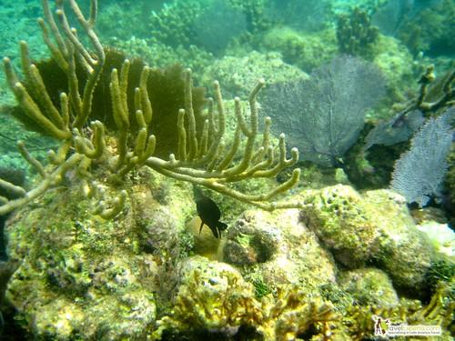 Coral Reef Second Largest Barrier Reef in the World Roatan Honduras Snorkeling