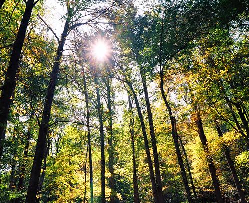 park trees light fall film nature beauty landscape gold golden virginia nikon play kodak hike foliage national va di 100 kodachrome f80 shenandoah tamron f28 xr sunflare ektar snp 2875 flickrdiamond