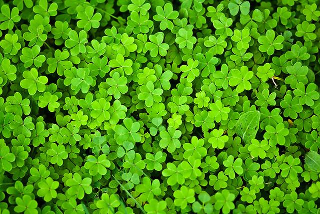 Tréboles, encuentra el de cuatro hojas | Flickr - Photo ...