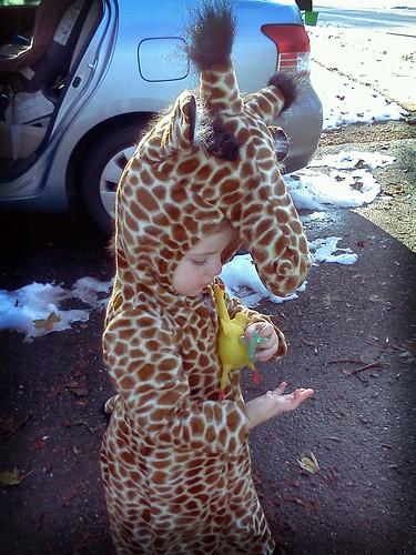 Giraffe with rubber chicken