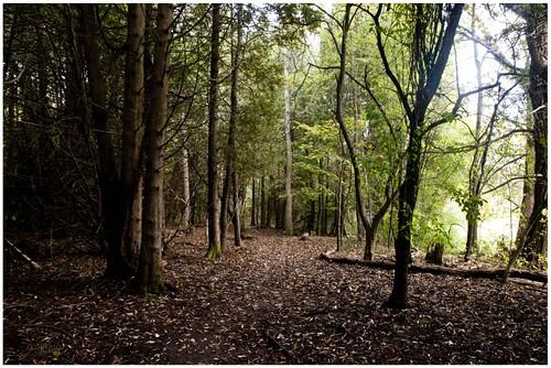 Niska Trail by felixtrio