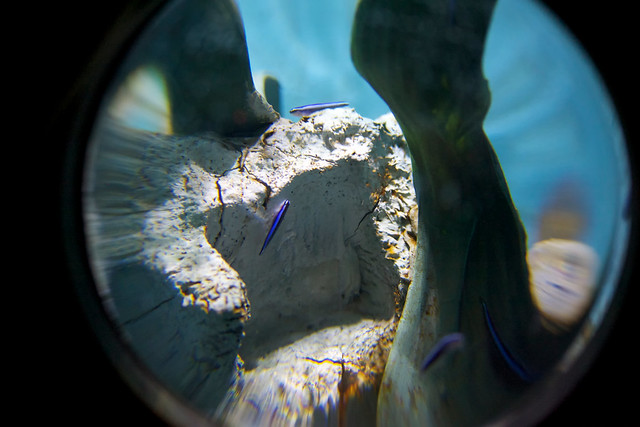 Sea Life Aquarium Grapevine Mills Mall Flickr Photo Sharing