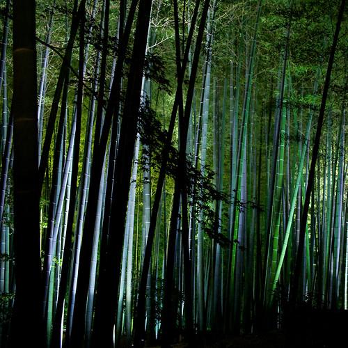 plant japan temple nikon kyoto 京都 寺 植物 ニコン d700