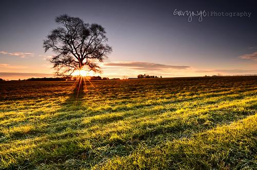 usa sun tree sunrise nikon maryland flare lone burst gaithersburg d7000 nikonfacebook